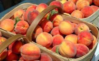 19 лучших сортов персиков: ранние, средние, поздние, самоопыляемые