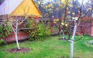 Уход за яблоней осенью после сбора урожая и подготовка к зиме: полив и подкормка, обработка деревьев