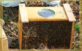 Отзывы о «Ленинградские пчёлы»