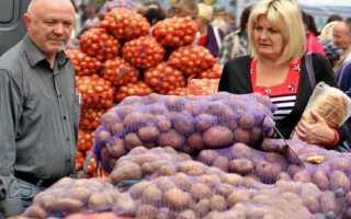 Как выбрать картошку на зиму на рынке: советы при покупке, видео