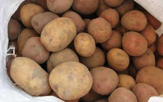 Обработка картофеля перед посадкой для повышения урожайности и защиты от вредителей