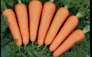 Морковь сорта Каскад F1: фото, описание, уход