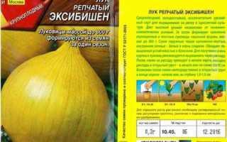 Лук Эксибишен: выращивание из семян через рассаду