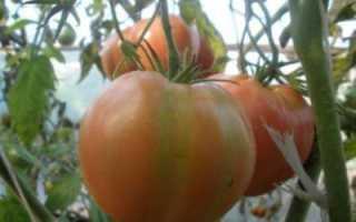 Томат Алсу: описание сорта, особенности, выращивание и отзывы