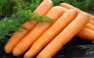 Морковь Маэстро F1: описание, фото, отзывы