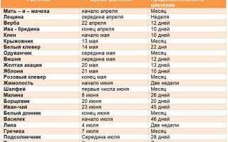 Медоносные растения и травы: классификация с описанием
