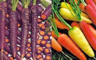 Морковь необычные сорта, Огород и земледелие