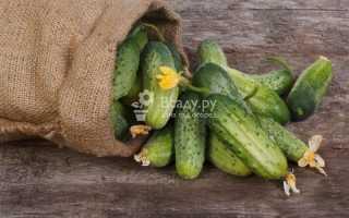 Лучшие сорта огурцов для засолки и консервирования фото и описание