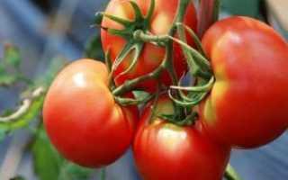 Томат Бенито: характеристика и описание сорта, урожайность фото