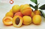 Польза и вред косточек абрикоса для женщин, мужчин, при беременности, Хорошие привычки