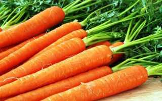 14 сорта моркови для зимнего хранения: среднеспелые, поздние, ранние, крупные