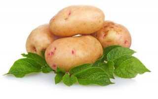 Поздние сорта картофеля