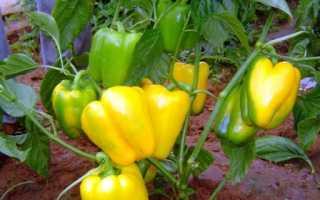 Сорта зеленого сладкого перца: описание сорта, характеристика, отзывы об урожайности, фото