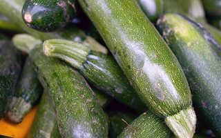 Семена кабачков: лучшие сорта для открытого грунта — 50 лучших сортов!