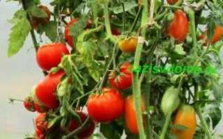 Когда сажать томаты на рассаду в 2019 году: сроки посева помидор и высаживания рассады в открытый грунт
