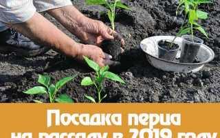 Когда сажать перец на рассаду в 2019 году по лунному календарю?