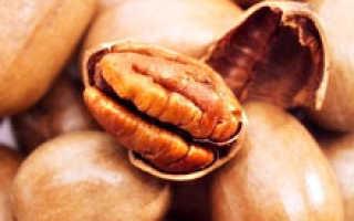 Орех пекан: польза и вред ореховых антиоксидантов