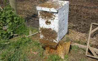 Пчелы покинули улей, О пасеке