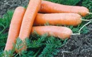 Морковь без сердцевины: сорта, описание, фото