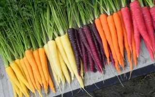 Желтая морковь: описание сорта с фото