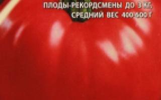Томат Русский размер: описание, отзывы, фото, характеристика
