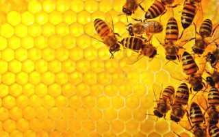 Способы размножения пчел: естественное и искусственное