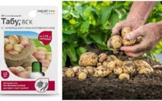 Препарат «Табу» — как защитить картофель от проволочника и колорадского жука