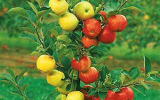 Прививка плодовых деревьев весной, время и сроки, лучшие способы прививки, видео