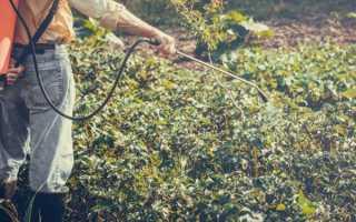Командор для обработки клубней картофеля от колорадского жука: инструкция по применению, отзывы