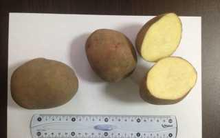 Картофель: подготовка к посадке весной, подготовка к проращиванию