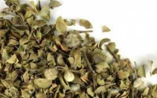Листья черники: полезные свойства и противопоказания, отзывы