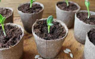 Когда сажать огурцы на рассаду в 2019 году по лунному календарю — лучшие дни для посева огурцов семенами в январе, феврале, марте, апреле и мае