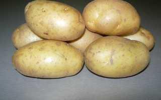 Сорт картофеля Инноватор: фото и описание