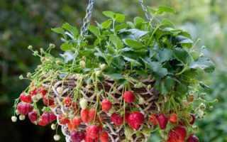 Вертикальное выращивание клубники в домашних условиях