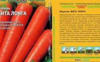 Лучшие сорта моркови для хранения на зиму — обзор и отзывы