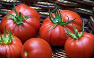 Томат Пузата хата: отзывы, фото, урожайность