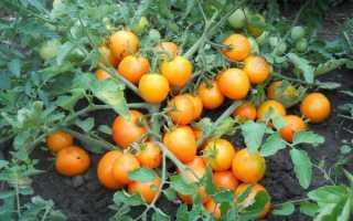 Детерминантные и индетерминантные сорта помидор: в чем разница и что это такое