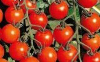 Томат Дюймовочка характеристика, описание особенностей выращивания, фото и отзывы