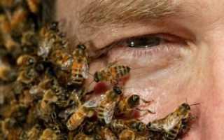 Что такое апитерапия: польза и вред лечения пчелами