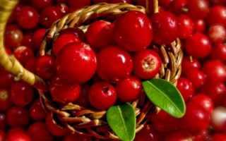 Брусничный морс: польза и вред, рецепты приготовления
