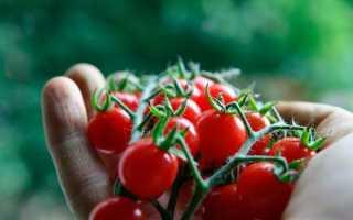 Томат Клюква в сахаре: характеристика и описание сорта, выращивание из семян