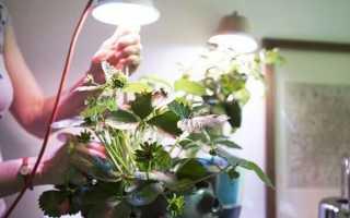 Клубника в горшках: как посадить, вырастить и собрать урожай в домашних условиях и на улице