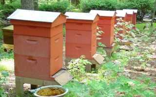 Пчелиные вредители и враги, кто ест пчел