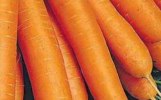 Морковь посевная — Витаминная 6