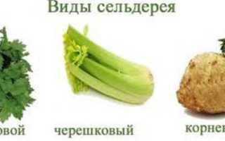 Как кушать сельдерей, какие части растения считаются съедобными и полезными