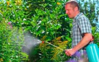 Борьба с сорняками на огороде, как бороться, методы