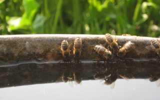 Мёд отбирают по правилам