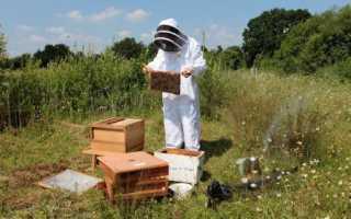 Как сделать нуклеус для пчел своими руками: чертежи, размеры, что это
