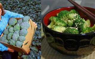 Как и когда посадить капусту брокколи на рассаду