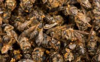 Подмор пчелиный для суставов: настойка, рецепт, лечение